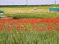 Enjoying the sunshine^ - geograph.org.uk - 1368449.jpg