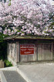Entrance to the Japanese Gardens.jpg