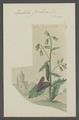 Euchelia - Print - Iconographia Zoologica - Special Collections University of Amsterdam - UBAINV0274 055 04 0010.tif