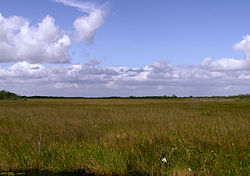The primary feature of the Everglades is the sawgrass prairie.