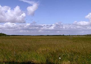 Everglades wetlands area in Florida, US