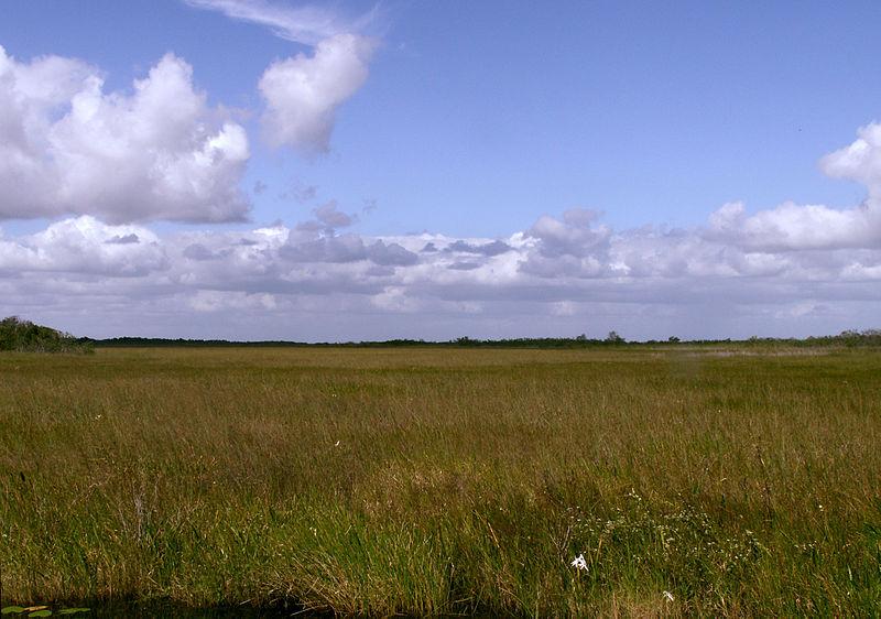 File:Everglades Sawgrass Prairie Moni3.JPG
