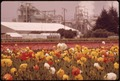 FLOWER FIELDS BEHIND WHICH IS GREFCO INC., DICALITE DIVISION MANUFACTURERS OF DIATOMACEOUS EARTH - NARA - 542707.tif