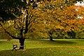 Fall (49889826).jpeg