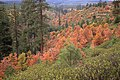 Fall Color, Mt Hood National Forest-2 (37051483651).jpg