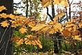 Fall Leaves (2946844632).jpg