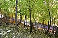 Fall colors on the top of Mogollon Rim (4017077410).jpg