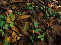 Fallen leaves and branches.jpg