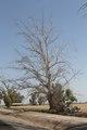 Farming in the El Centro region in California LCCN2013633417.tif
