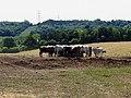 Farmland near Stichens Green and Streatley - geograph.org.uk - 21201.jpg