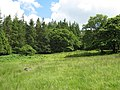 Field and forest immediately south of the Tyddyn-mawr bridge - geograph.org.uk - 495553.jpg