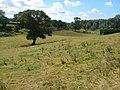 Field beside Green Lane near East Allington - geograph.org.uk - 211257.jpg