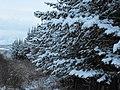 First snowfall - panoramio.jpg