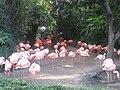FlamingoLAZoo.JPG