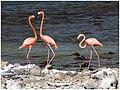Flamingos (457516148).jpg