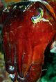 Flickr - JennyHuang - Huge Cuttlefish.jpg