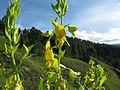 Flores de merida.JPG