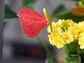 Flower (8726389935).jpg