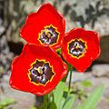 Flower 2694.jpg