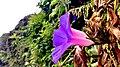 Flowermy.jpg