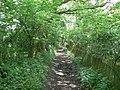 Footpath in Bramley Frith Wood - geograph.org.uk - 825554.jpg