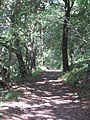 Footpath in Devichoys Wood Nature Reserve - geograph.org.uk - 846114.jpg