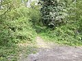 Footpath into Honey Wood - geograph.org.uk - 413327.jpg