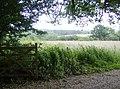 Footpath to Blacklands Farm - geograph.org.uk - 472486.jpg