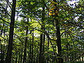 Forest01s2048.jpg