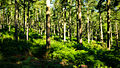 Forest Light (7563838382).jpg