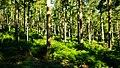 Forest Light (7563838382).jpg