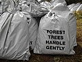 Forest Trees Handle Gently - geograph.org.uk - 738475.jpg