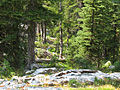 Forest along Alpine Lake Trail (15184854032).jpg