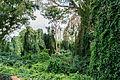 Forest in La Asunción, Margarita Island.jpg