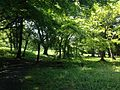 Forest near site of Mirokuji Temple in Usa Shrine 2.JPG