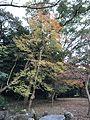 Forest of Sumiyoshi Shrine.jpg