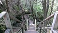 Forest stairs (23991056677).jpg