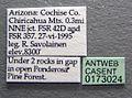 Formica wheeleri casent0173024 label 1.jpg