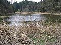 ForsthofWeiher5417.JPG