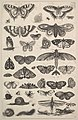 Forty-one Insects, including moths and butterflies MET DP823916.jpg