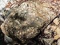 Fossilien Atzlriff 1.JPG