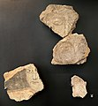 Frammenti di pitture parietali con teste, da s. teresa dei maschi a bari, IX-XI secolo ca.jpg