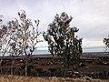 Fresno, CA, USA - panoramio (37).jpg