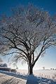 Frozen (5238695850).jpg