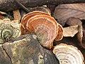 Fungus on Fungus.jpg
