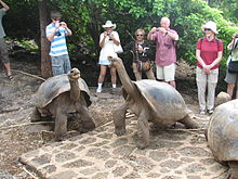 Two Galápagos tortoises occupy the foreground, apparently unconcerned by the presence of several tourists a few feet behind them. The tourists wear assorted sunglasses and sunhats, and most are taking pictures of the tortoises with their digital cameras.