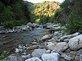 Gallipari river near Petina.jpg