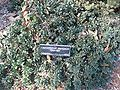 Gardenology.org-IMG 0654 hunt07mar.jpg