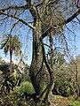Gardenology.org-IMG 2666 hunt0903.jpg