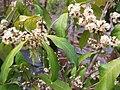 Gardenology.org-IMG 7200 qsbg11mar.jpg